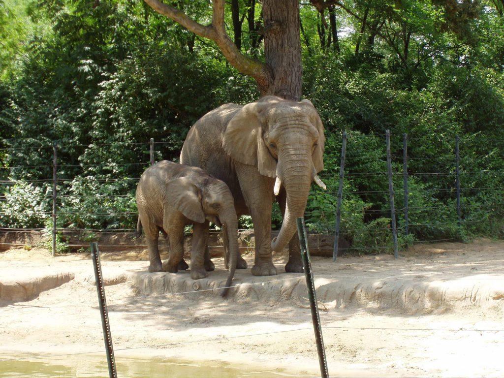 Disciplina de Elefante!